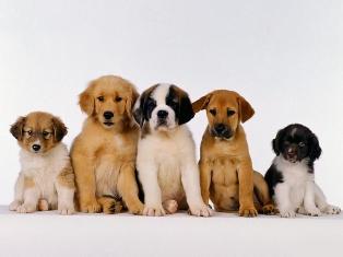 سگ های خانگی