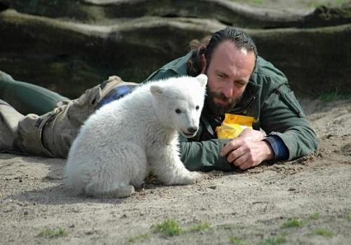 خرس های قطبی 600 هزار ساله