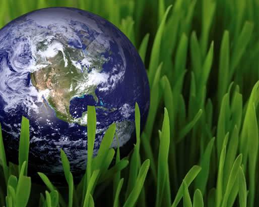 زمین پاک