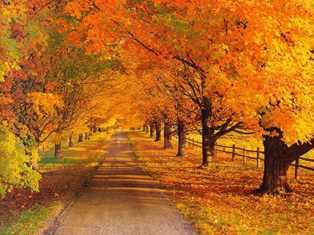مزاج  فصل پاییز و تدابیر آن