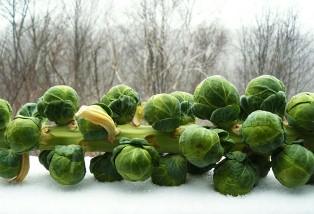 تغذیه پر ویتامین زمستانی