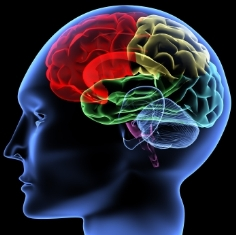 ذهن و مغز و آلودگیها