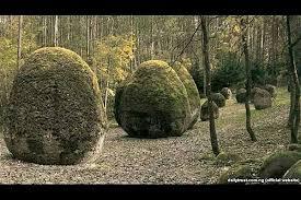 قدیمی ترین جنگل جهان