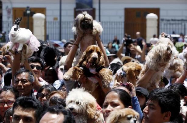 متبرک کردن حیوانات خانگی در پرو