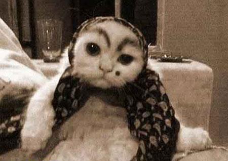 روایت تاج السلطنه دختر ناصرالدینشاه از گربهای که زنان حرمسرا را پیش شاه عزیز میکرد!